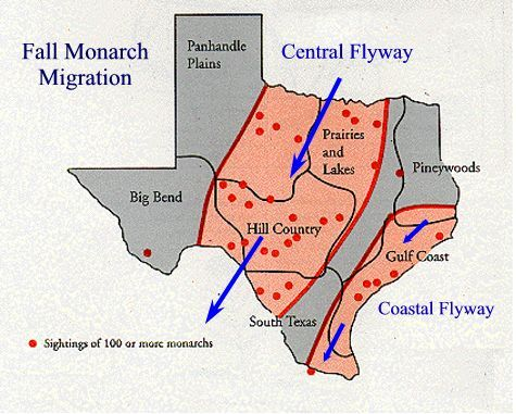 Fall Monarch Migration Through Texas Map