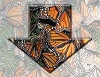 Monarch Population Down