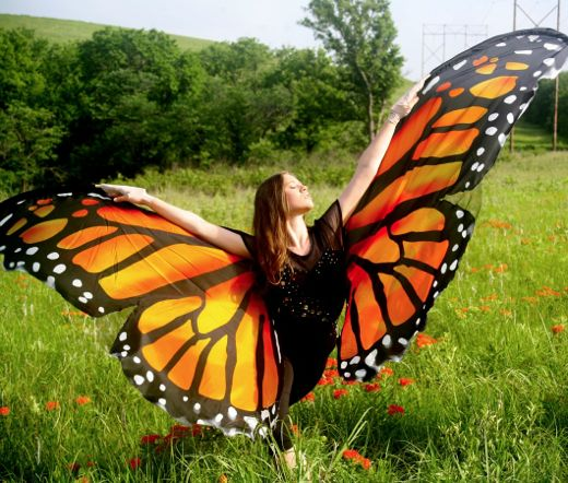 monarch watch blog archive moving for monarchs m4m