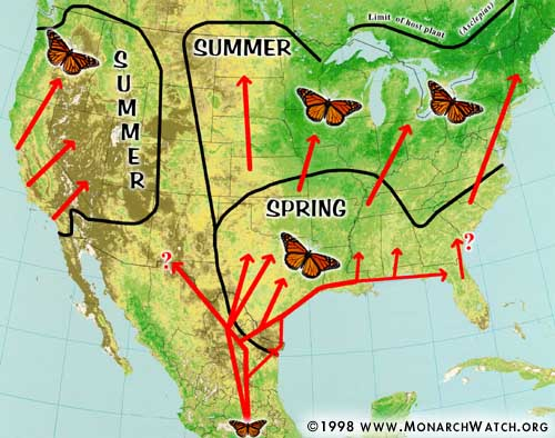 A Scoop on the Life Cycle And Migration of a Monarch Butterfly