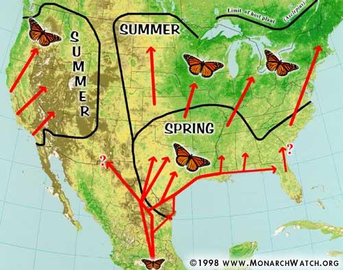 monarch watch migration tagging spring migration